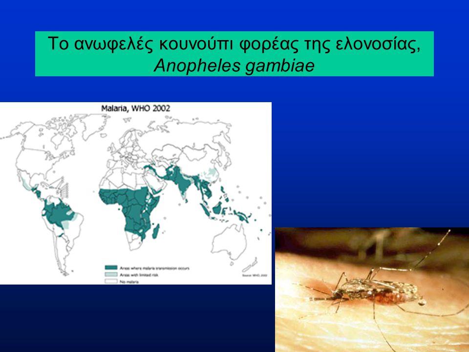 Το ανωφελές κουνούπι φορέας της ελονοσίας, Anopheles gambiae