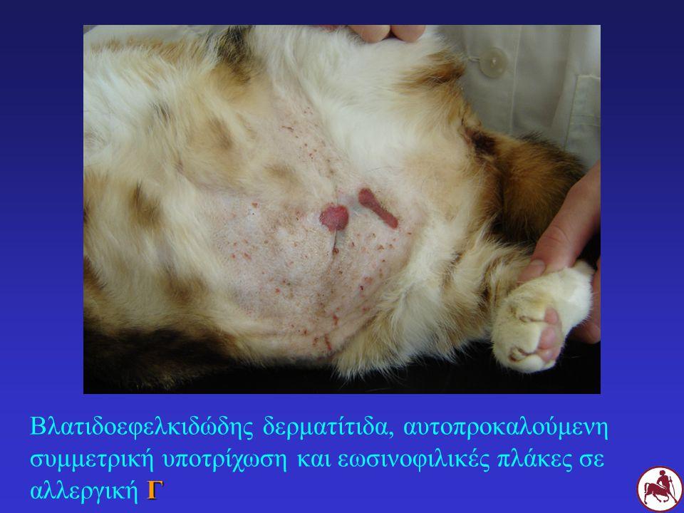 Βλατιδοεφελκιδώδης δερματίτιδα, αυτοπροκαλούμενη συμμετρική υποτρίχωση και εωσινοφιλικές πλάκες σε αλλεργική Γ