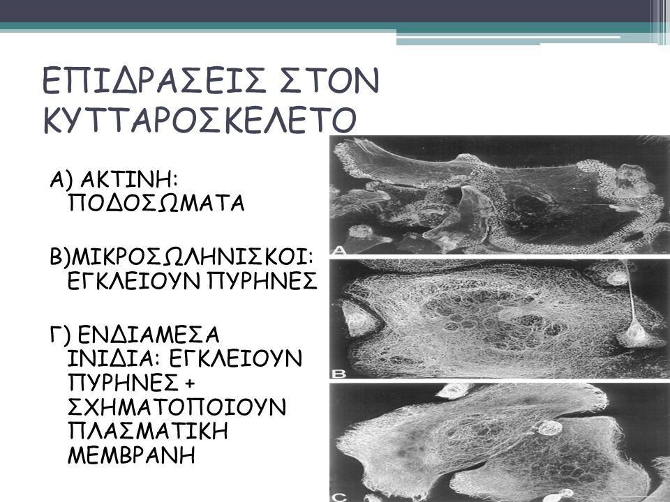 ΕΠΙΔΡΑΣΕΙΣ ΣΤΟΝ ΚΥΤΤΑΡΟΣΚΕΛΕΤΟ