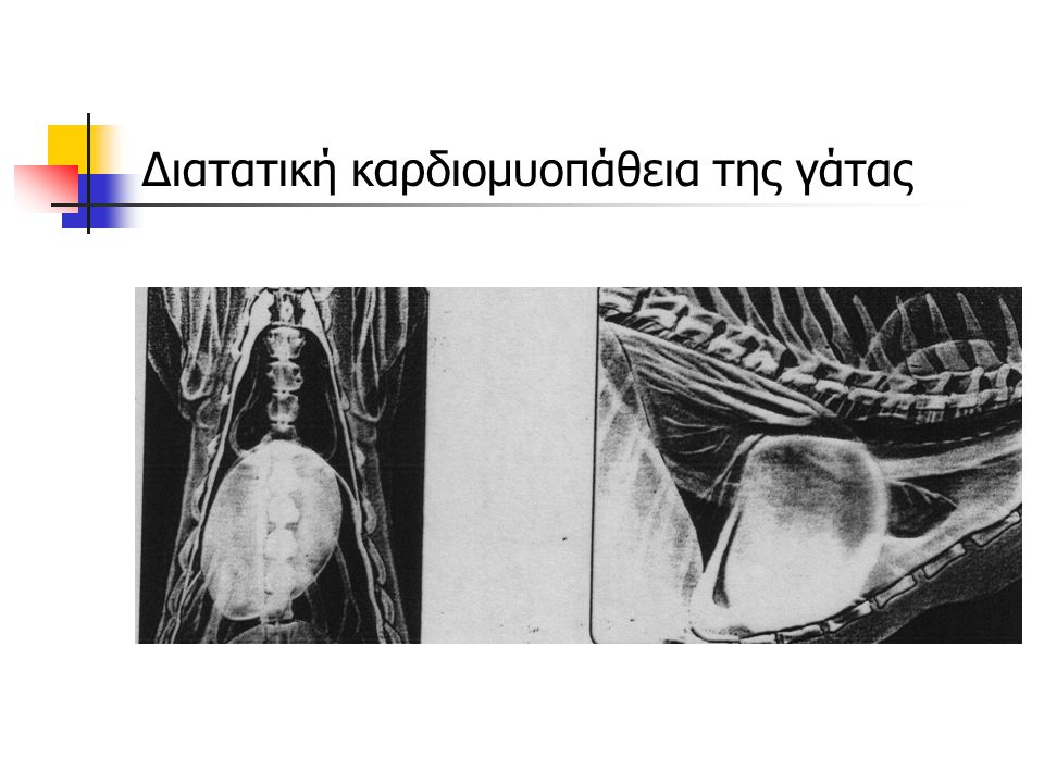 Διατατική καρδιομυοπάθεια της γάτας