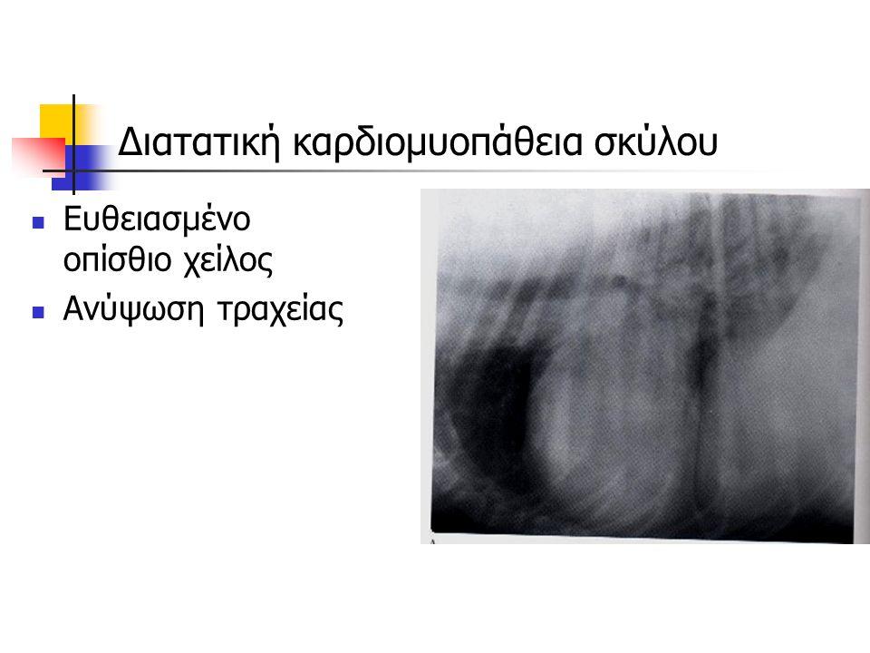 Διατατική καρδιομυοπάθεια σκύλου