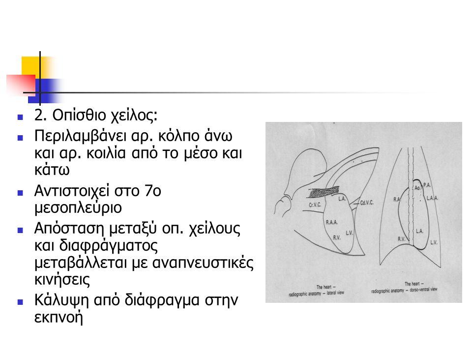 2. Οπίσθιο χείλος: Περιλαμβάνει αρ. κόλπο άνω και αρ. κοιλία από το μέσο και κάτω. Αντιστοιχεί στο 7ο μεσοπλεύριο.