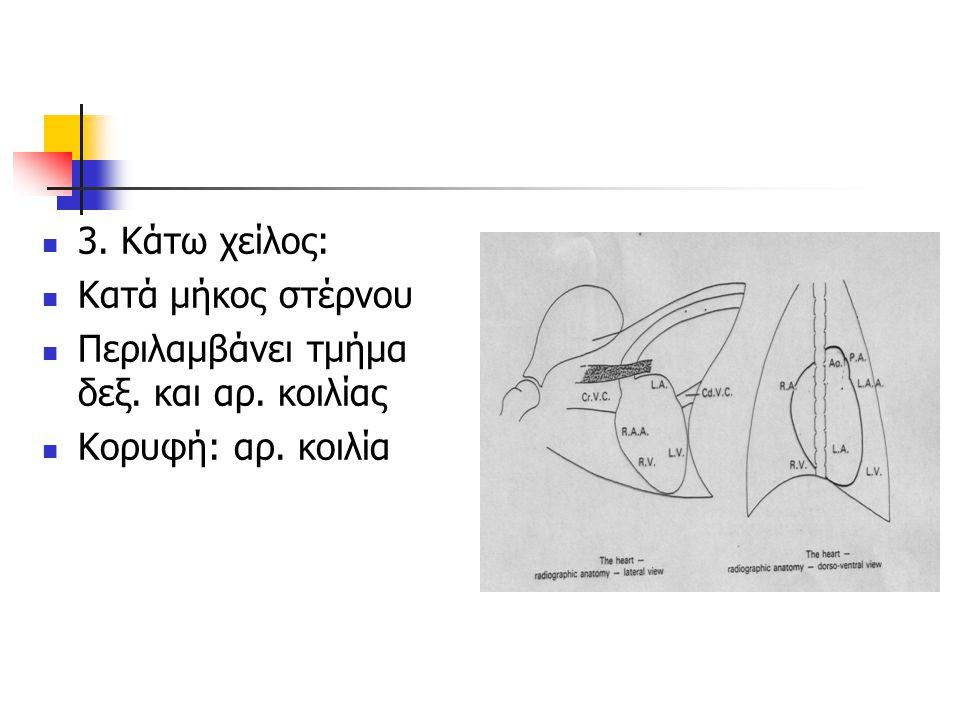 3. Κάτω χείλος: Κατά μήκος στέρνου Περιλαμβάνει τμήμα δεξ. και αρ. κοιλίας Κορυφή: αρ. κοιλία
