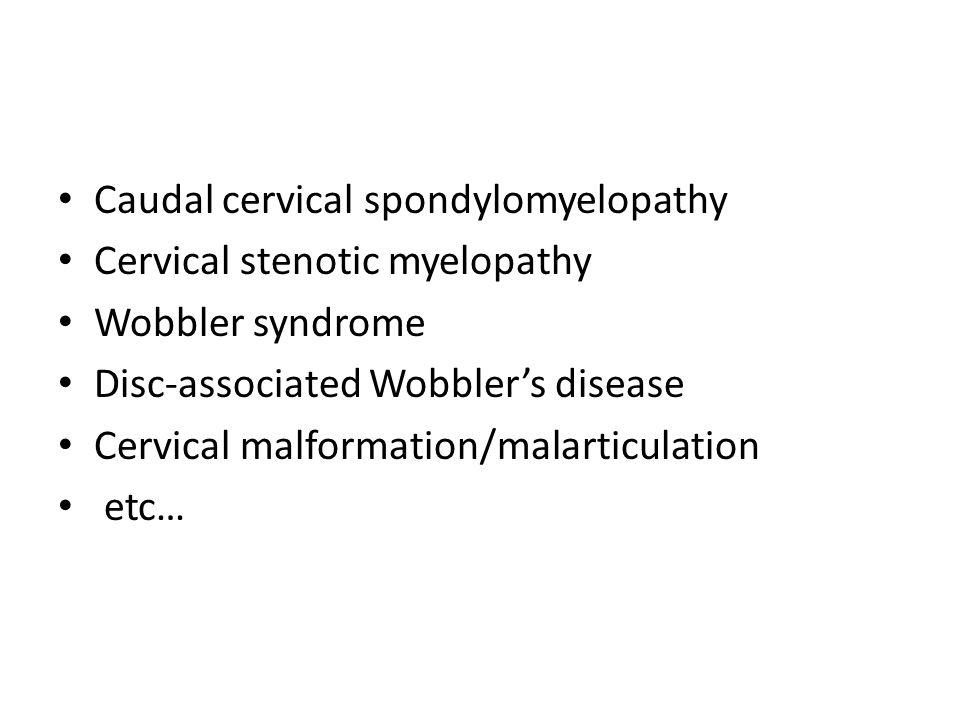 Caudal cervical spondylomyelopathy