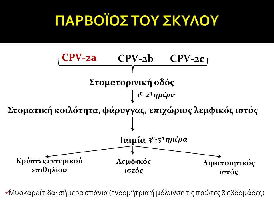ΠΑΡΒΟΪΟΣ ΤΟΥ ΣΚΥΛΟΥ CPV-2a CPV-2b CPV-2c Στοματορινική οδός