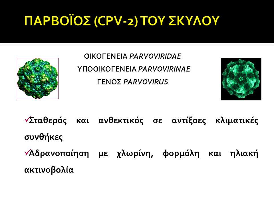 ΠΑΡΒΟΪΟΣ (CPV-2) ΤΟΥ ΣΚΥΛΟΥ