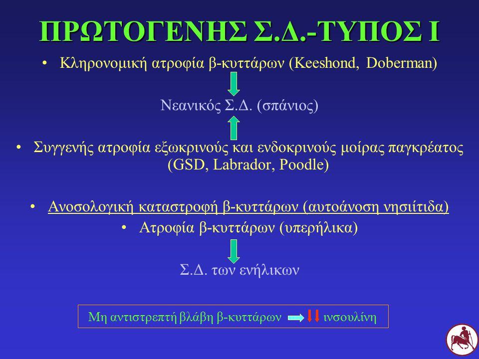ΠΡΩΤΟΓΕΝΗΣ Σ.Δ.-ΤΥΠΟΣ Ι Κληρονομική ατροφία β-κυττάρων (Keeshond, Doberman) Νεανικός Σ.Δ. (σπάνιος)