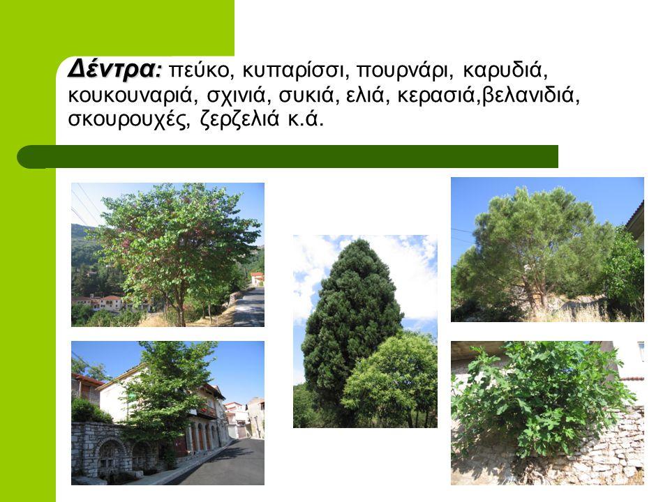 Δέντρα: πεύκο, κυπαρίσσι, πουρνάρι, καρυδιά, κουκουναριά, σχινιά, συκιά, ελιά, κερασιά,βελανιδιά, σκουρουχές, ζερζελιά κ.ά.