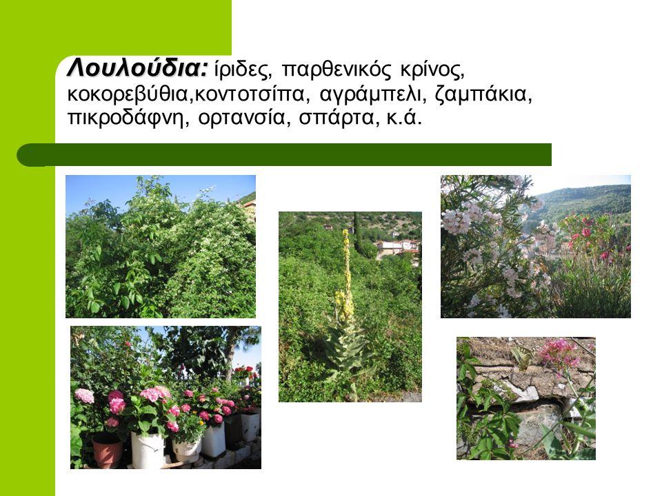 Λουλούδια: ίριδες, παρθενικός κρίνος, κοκορεβύθια,κοντοτσίπα, αγράμπελι, ζαμπάκια, πικροδάφνη, ορτανσία, σπάρτα, κ.ά.