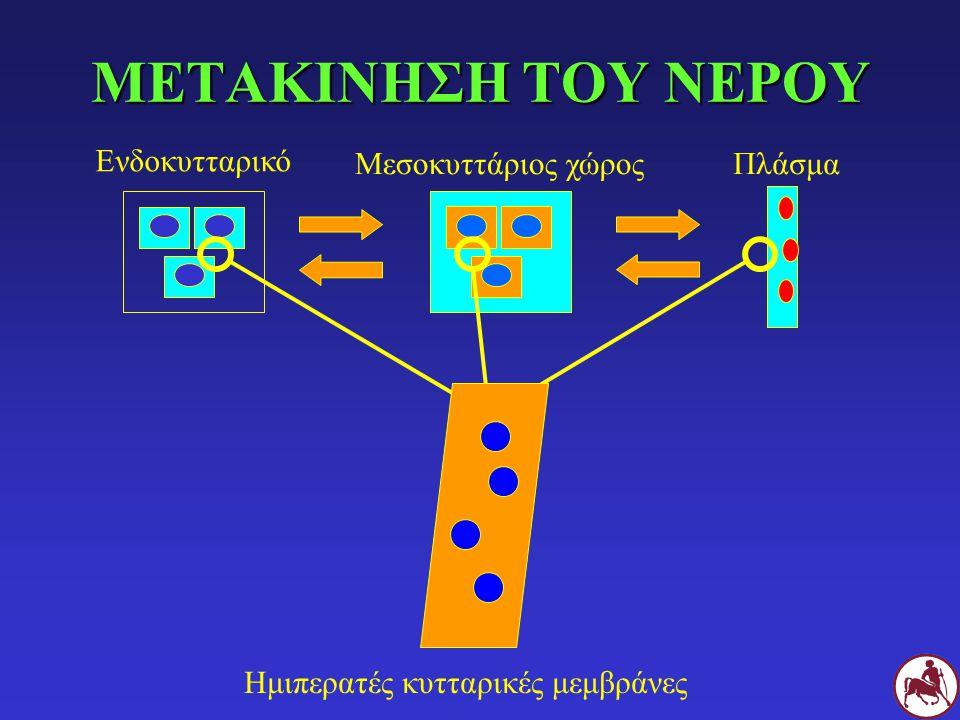 ΜΕΤΑΚΙΝΗΣΗ ΤΟΥ ΝΕΡΟΥ Ενδοκυτταρικό Μεσοκυττάριος χώρος Πλάσμα