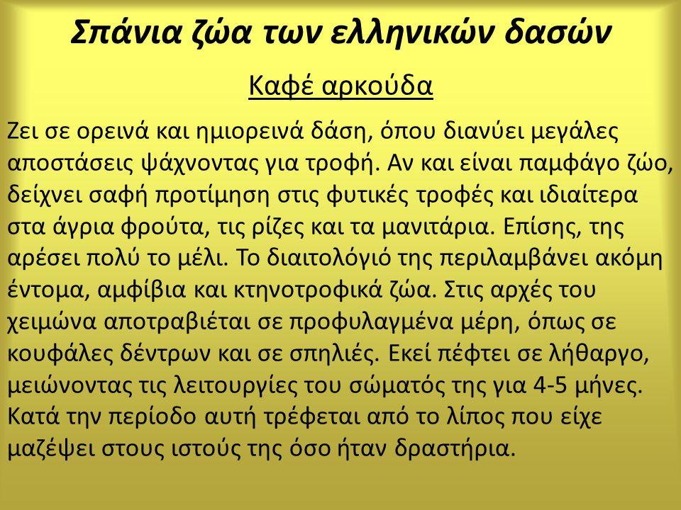 Σπάνια ζώα των ελληνικών δασών