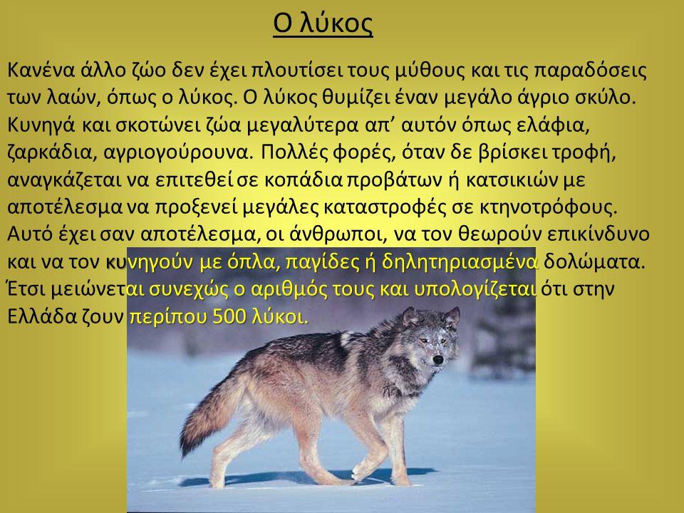 Ο λύκος