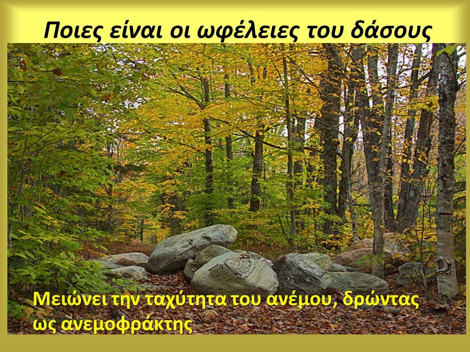 Ποιες είναι οι ωφέλειες του δάσους