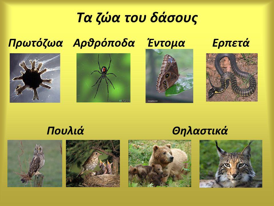 Τα ζώα του δάσους Πρωτόζωα Αρθρόποδα Έντομα Ερπετά.
