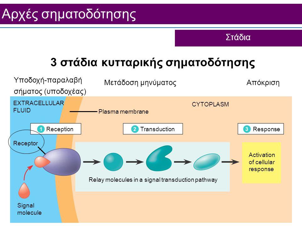 3 στάδια κυτταρικής σηματοδότησης