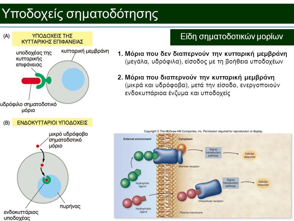 Είδη σηματοδοτικών μορίων