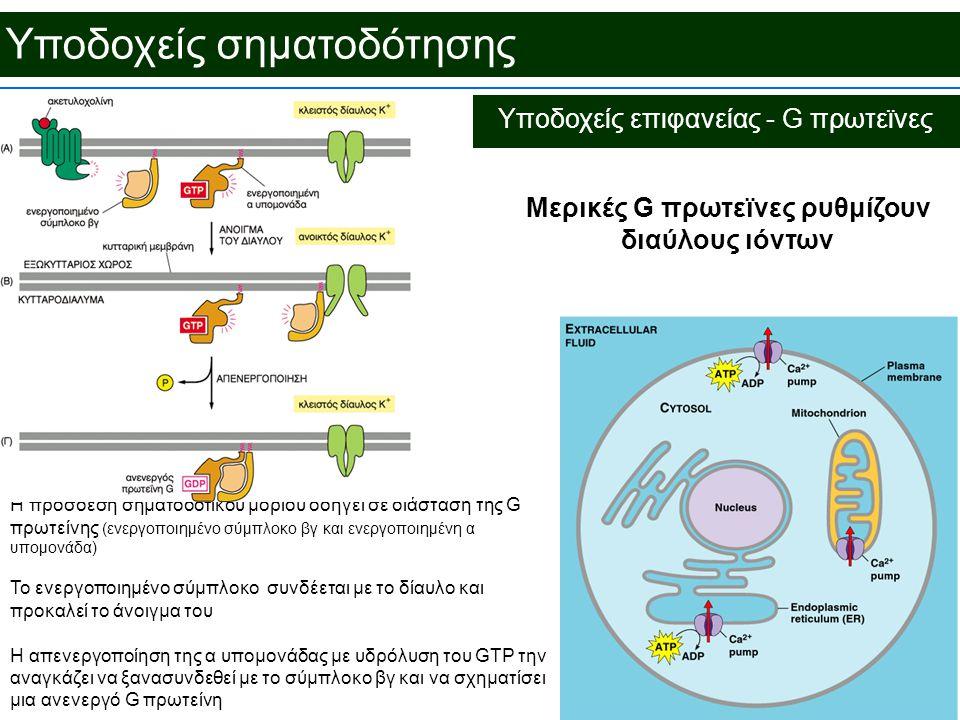 Μερικές G πρωτεϊνες ρυθμίζουν διαύλους ιόντων