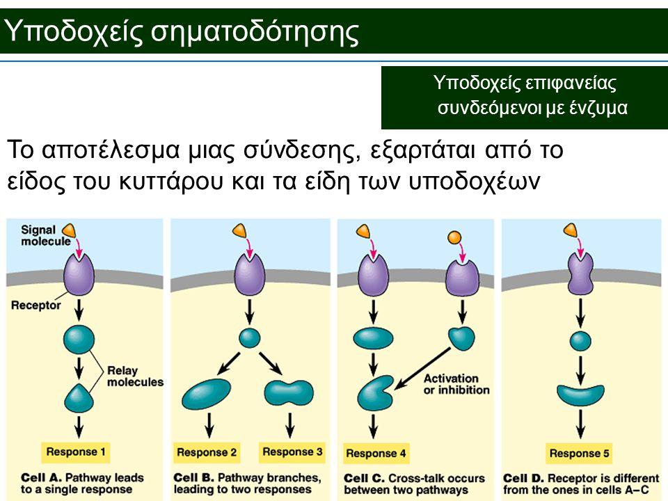Υποδοχείς επιφανείας συνδεόμενοι με ένζυμα