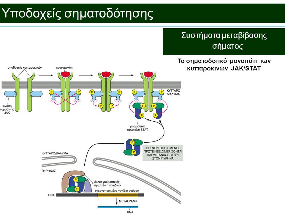 To σηματοδοτικό μονοπάτι των κυτταροκινών JAK/STAT