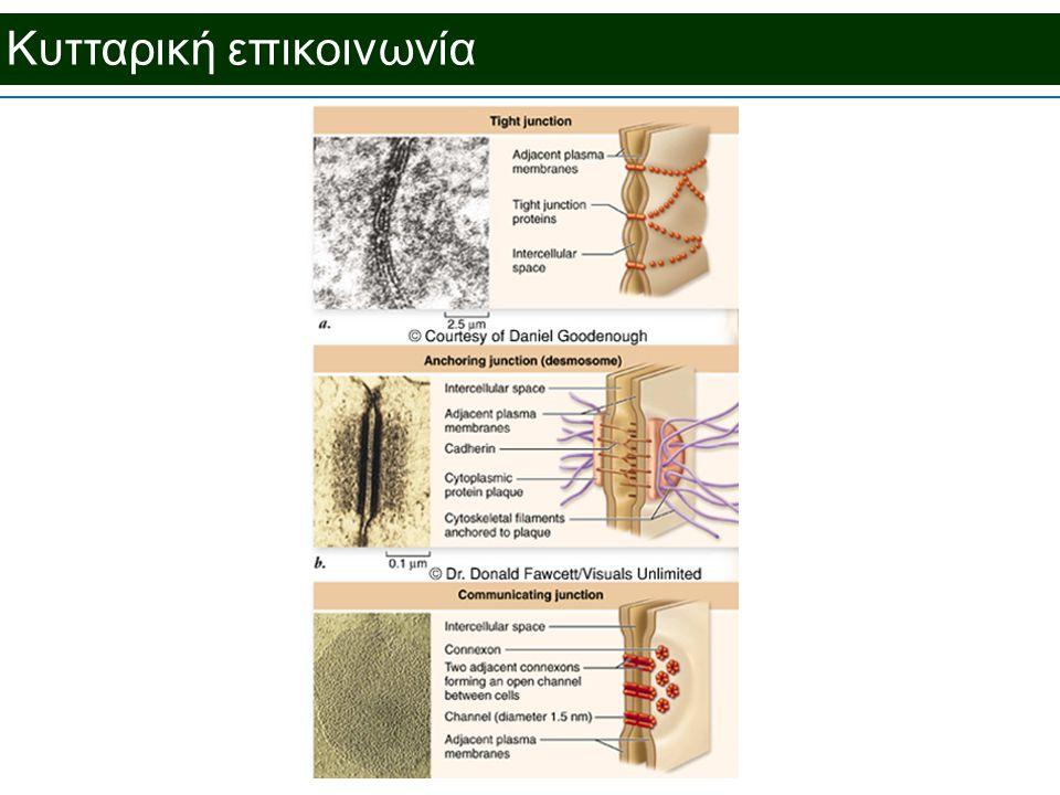 Κυτταρική επικοινωνία