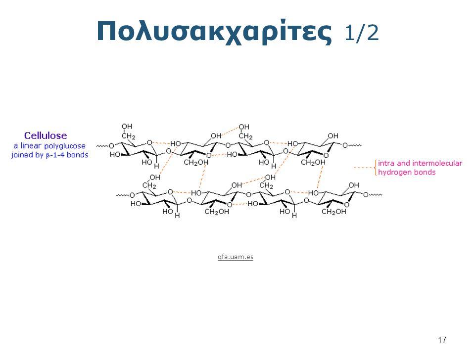 Πολυσακχαρίτες 2/2 myttex.net