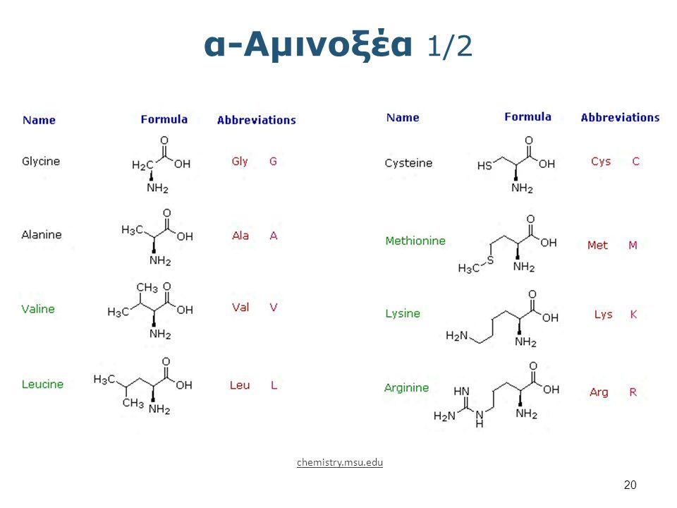 α-Αμινοξέα 2/2 chemistry.msu.edu
