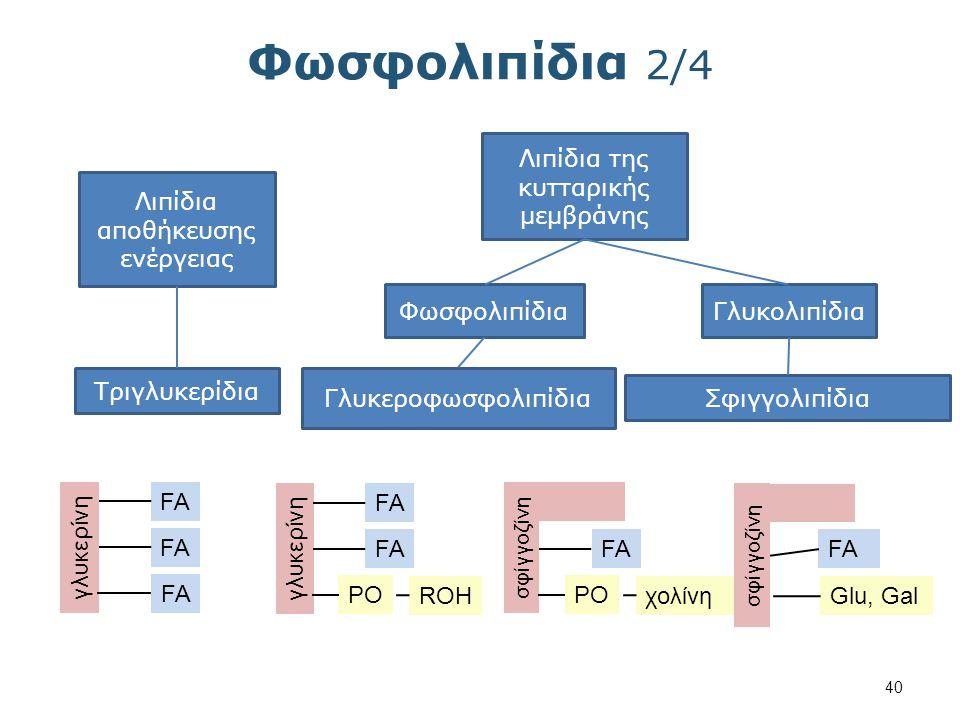 Φωσφολιπίδια 3/4 Τα δομικά μέρη ενός φωσφολιπιδίου