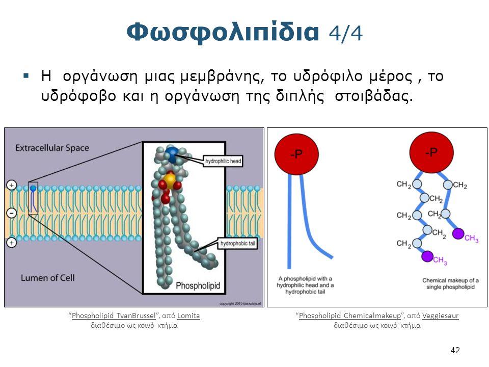Τερπένια Τερπένια, είναι υδρογονάνθρακες των φυτών που προέρχονται από την επανάληψη της ίδιας δομική μονάδα το ισοπρένιο.