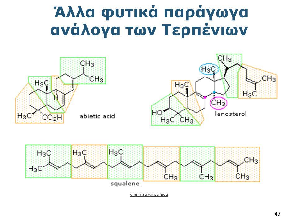 Στεροειδή chemistry.msu.edu