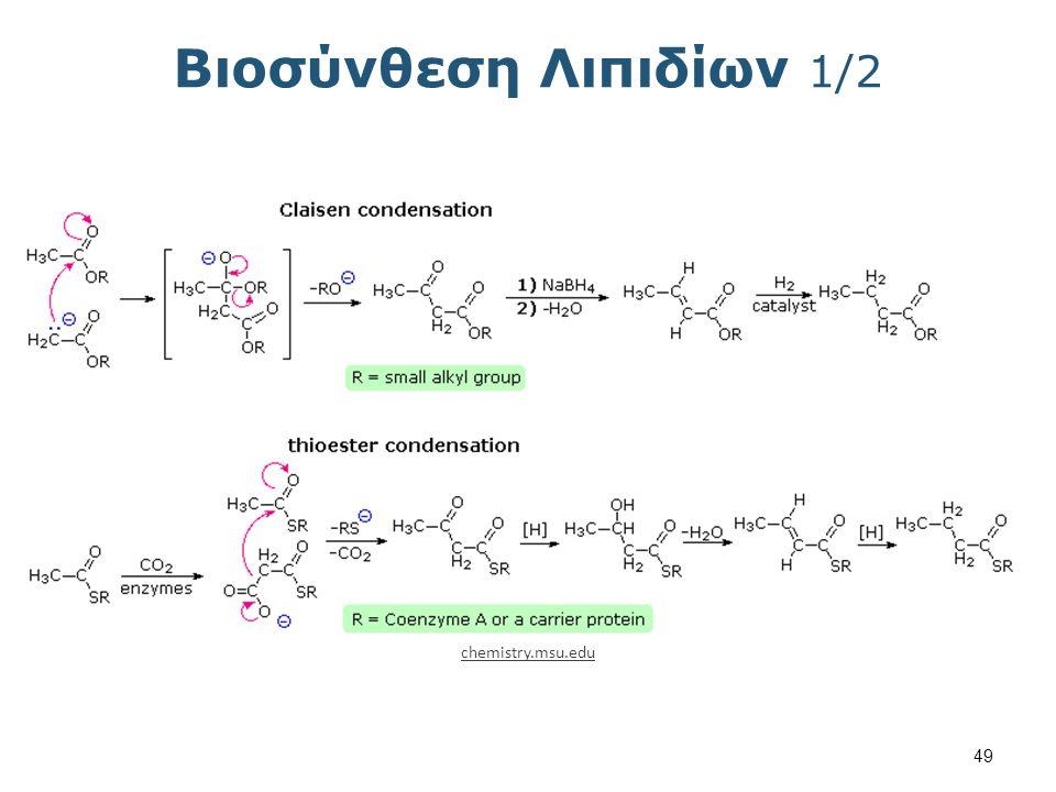 Βιοσύνθεση Λιπιδίων 2/2 Αλκυλίωση chemistry.msu.edu