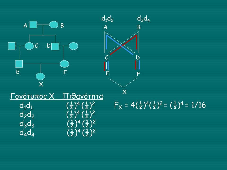 Γονότυπος Χ Πιθανότητα d1d1 (½)4 (½)2 d2d2 (½)4 (½)2 d3d3 (½)4 (½)2