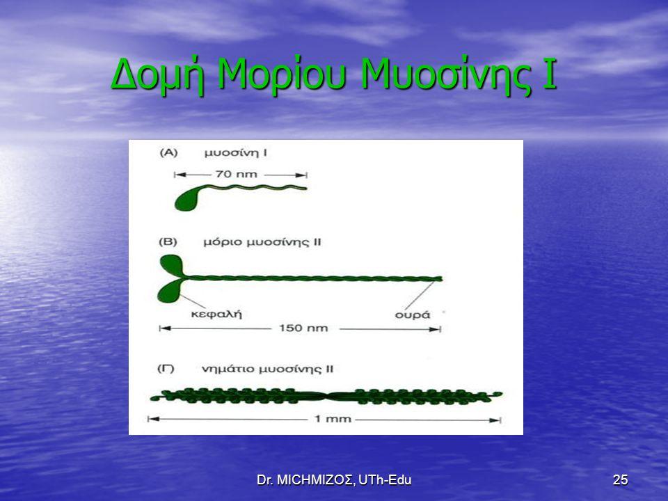 Δομή Μορίου Μυοσίνης Ι Dr. ΜΙCHΜΙΖΟΣ, UTh-Edu