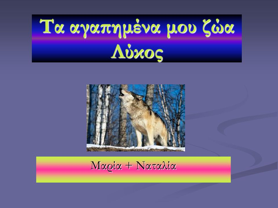 Τα αγαπημένα μου ζώα Λύκος