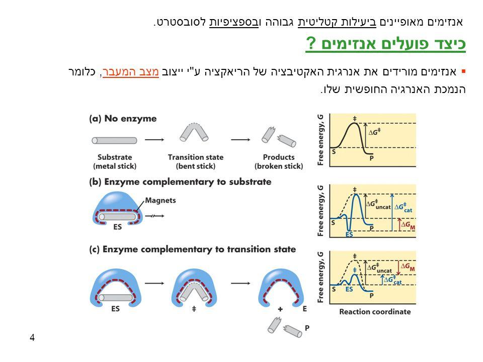 אנזימים מאופיינים ביעילות קטליטית גבוהה ובספציפיות לסובסטרט.