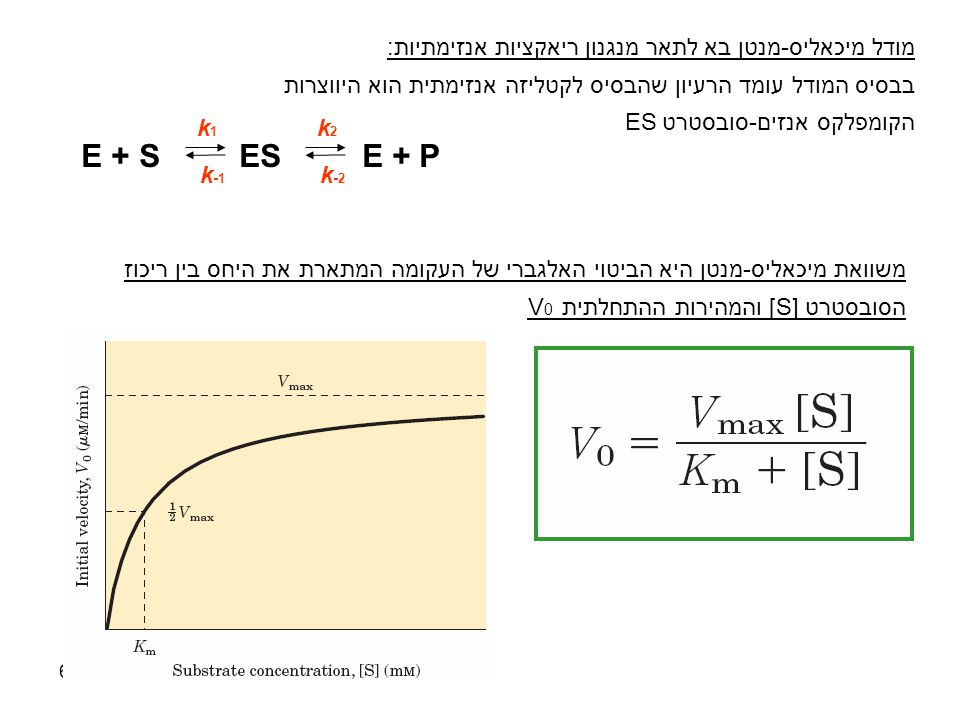E + S ES E + P מודל מיכאליס-מנטן בא לתאר מנגנון ריאקציות אנזימתיות:
