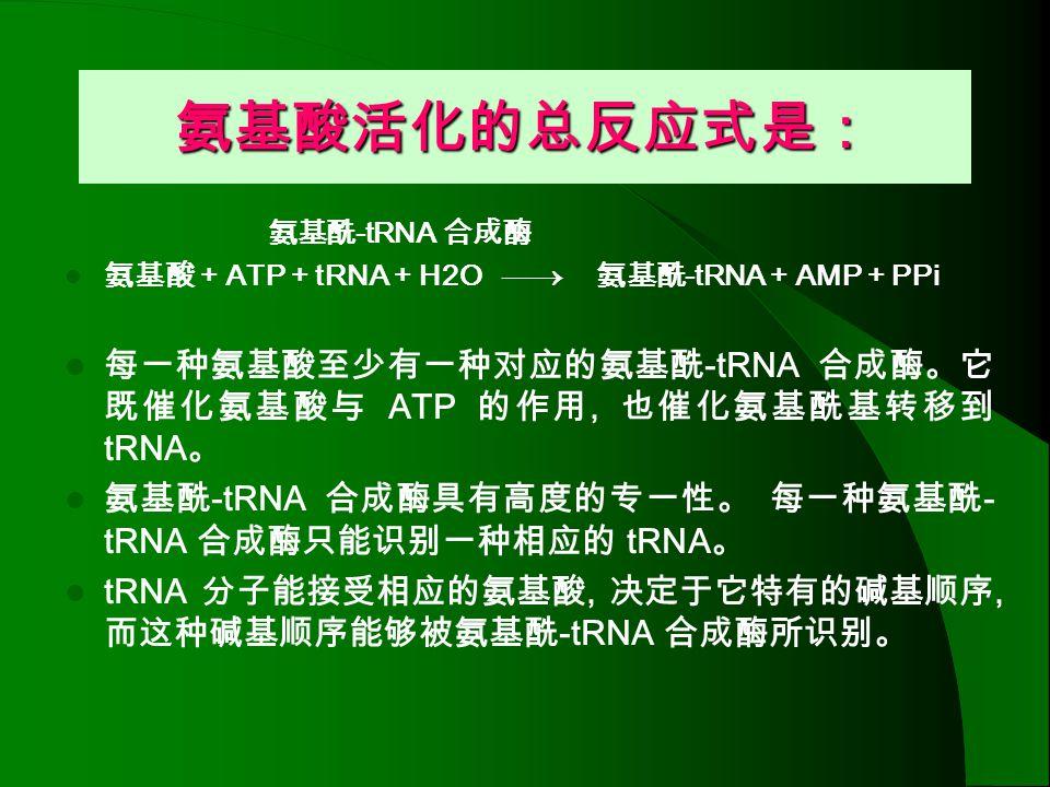 氨基酸活化的总反应式是: 氨基酰-tRNA 合成酶