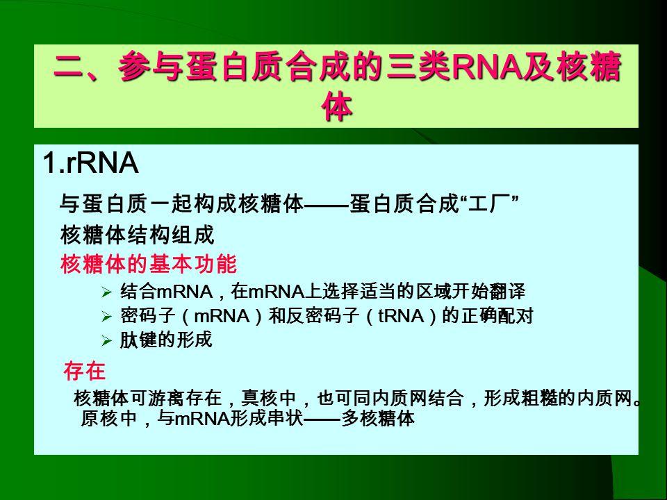 二、参与蛋白质合成的三类RNA及核糖体 1.rRNA 与蛋白质一起构成核糖体——蛋白质合成 工厂 存在 核糖体结构组成 核糖体的基本功能