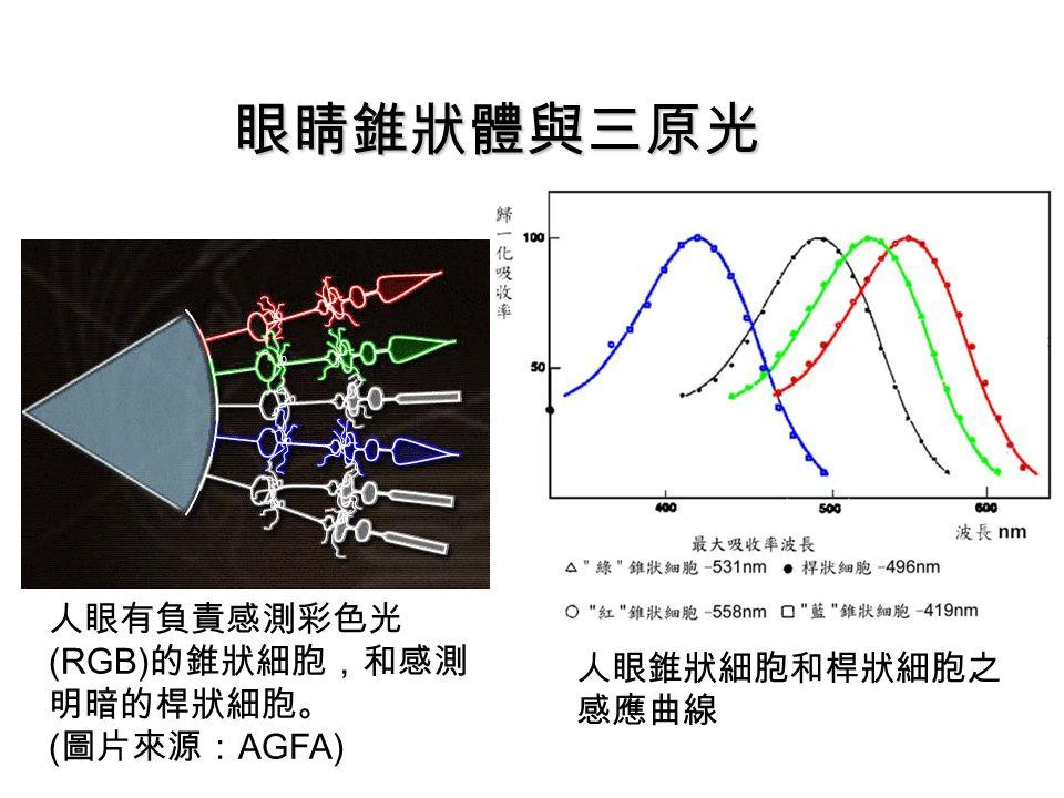 眼睛錐狀體與三原光 人眼有負責感測彩色光(RGB)的錐狀細胞,和感測明暗的桿狀細胞。 人眼錐狀細胞和桿狀細胞之感應曲線