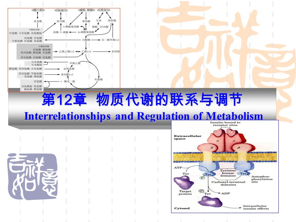 第12章 物质代谢的联系与调节 Interrelationships and Regulation of Metabolism