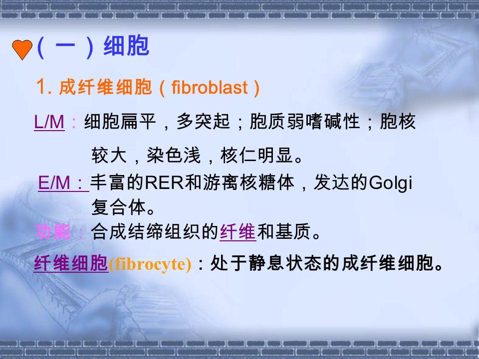 (一)细胞 1. 成纤维细胞(fibroblast) L/M:细胞扁平,多突起;胞质弱嗜碱性;胞核 较大,染色浅,核仁明显。 复合体。