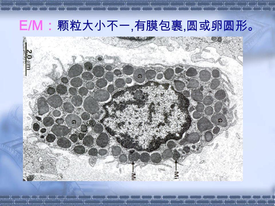 E/M:颗粒大小不一,有膜包裹,圆或卵圆形。