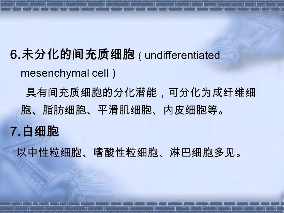 6.未分化的间充质细胞(undifferentiated mesenchymal cell)