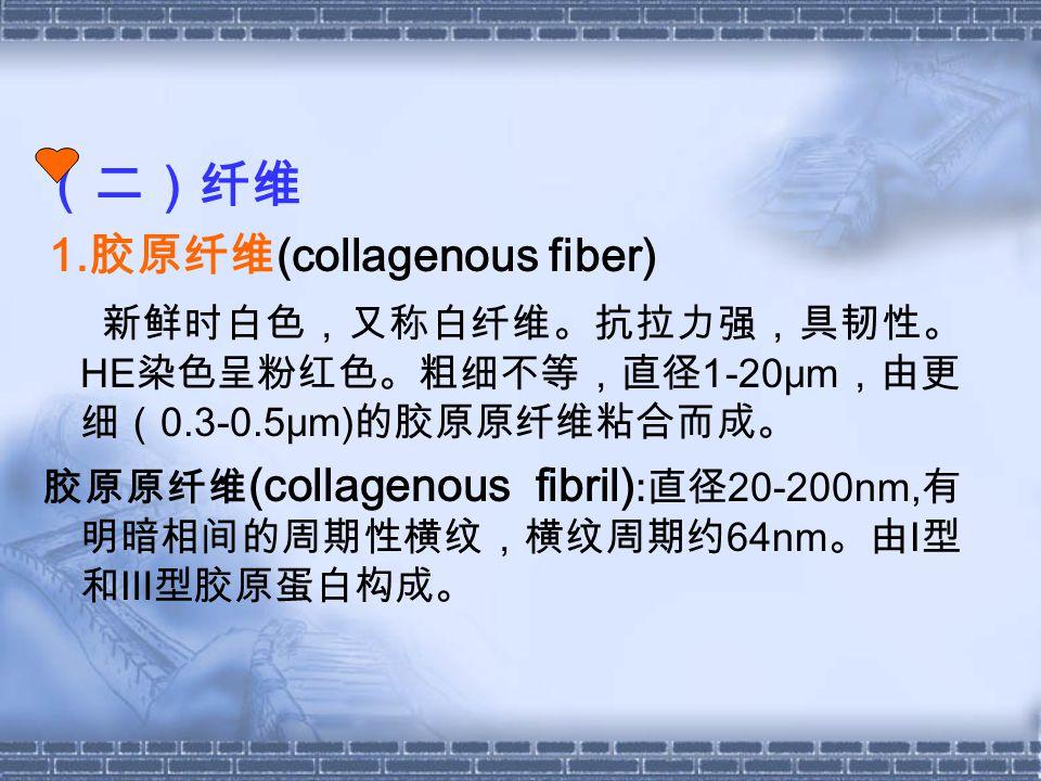 (二)纤维 1.胶原纤维(collagenous fiber)