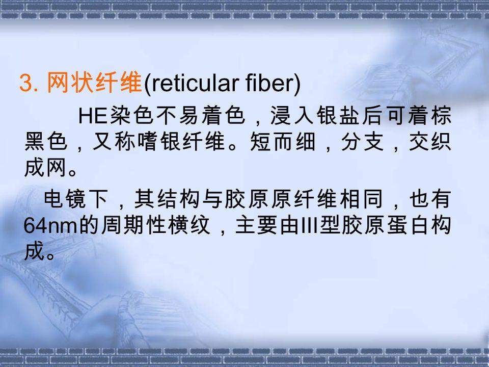 3. 网状纤维(reticular fiber)