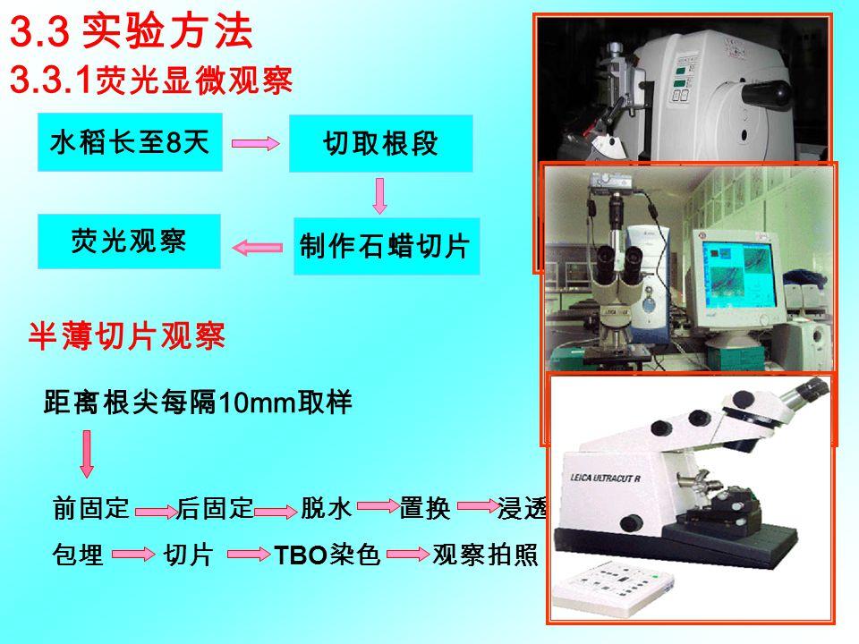 3.3 实验方法 3.3.1荧光显微观察 半薄切片观察 水稻长至8天 切取根段 荧光观察 制作石蜡切片 距离根尖每隔10mm取样