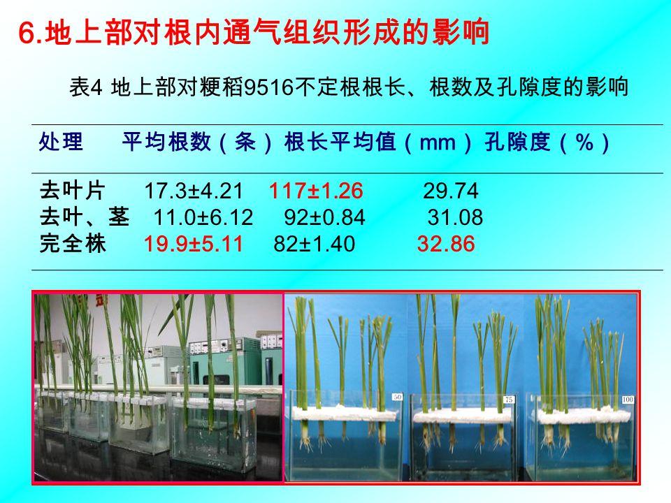 表4 地上部对粳稻9516不定根根长、根数及孔隙度的影响