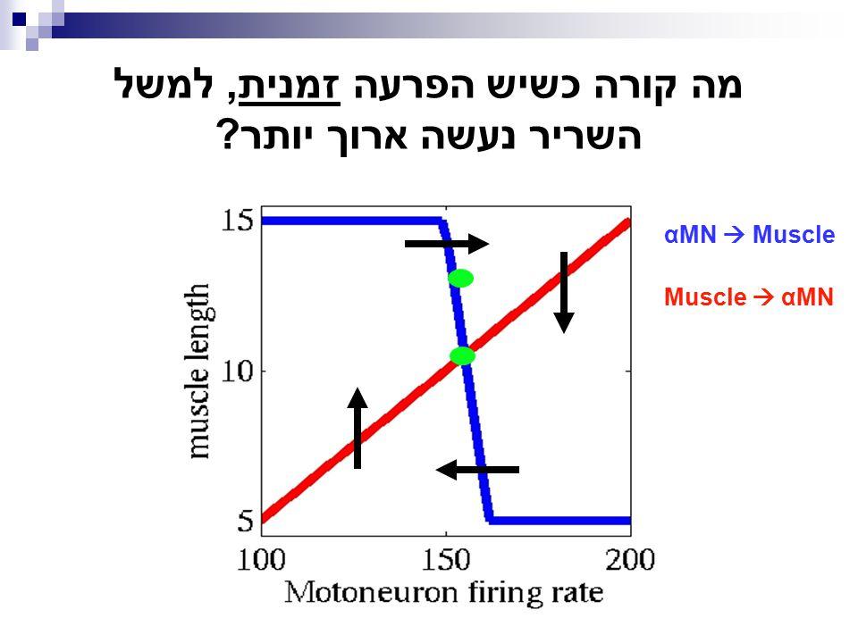 מה קורה כשיש הפרעה זמנית, למשל השריר נעשה ארוך יותר