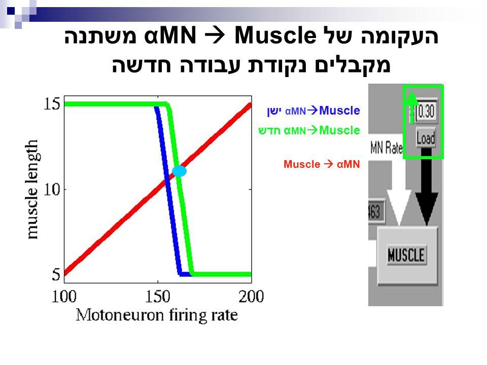 העקומה של αMN  Muscle משתנה מקבלים נקודת עבודה חדשה