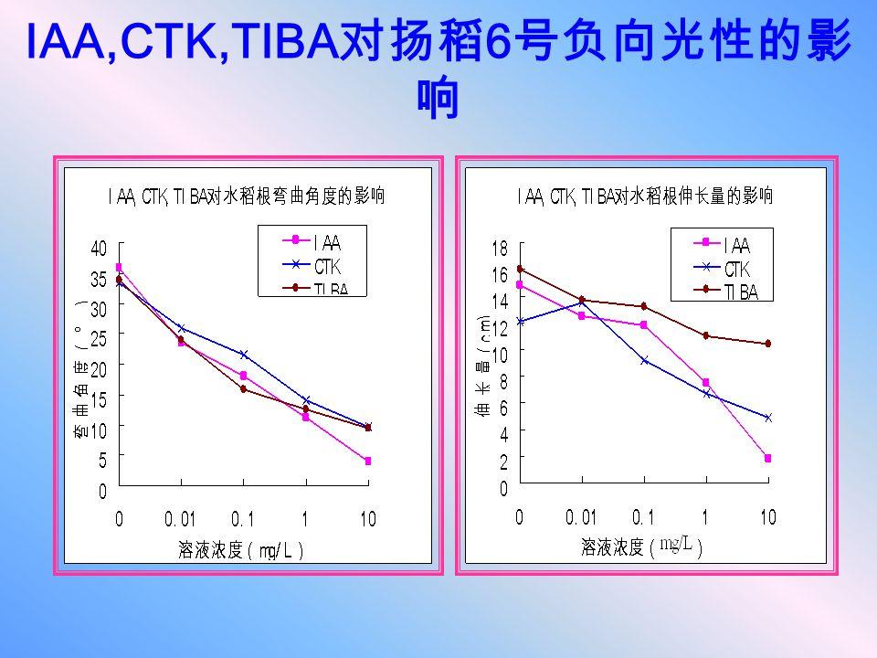 IAA,CTK,TIBA对扬稻6号负向光性的影响