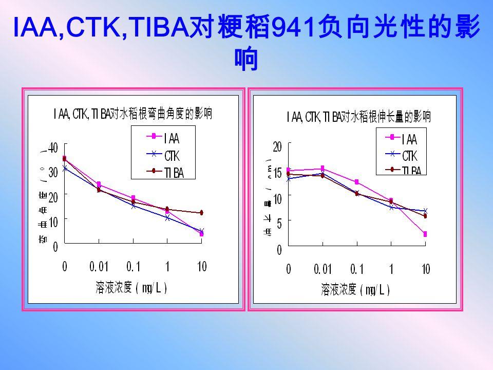IAA,CTK,TIBA对粳稻941负向光性的影响